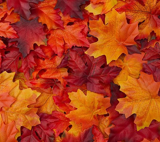 autunno-menu Novità